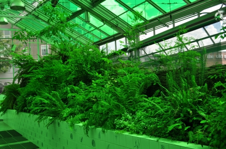 greenhouse - greenroofs, green, plants, greenhouse, nature