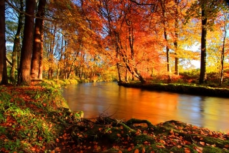 Forest river in autumn - forest, stream, colorful, fall, autumn, beautiful, creek, foliage, leaves, river, reflections