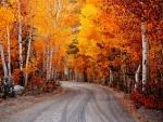 California Autumn F2C