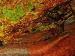 Forest autumn foliage