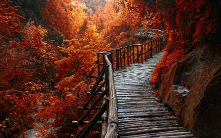 Forest Path - autum, forest, morning view, beautiful, trees, wooden path, walkway, river, red leaves