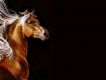Palomino Horse F