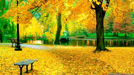 Autumn park - rest, fall, autumn, golden, bench, beautiful, park, trees, foliage, pond, leaves, city, walk