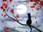 Silvery Moonlight