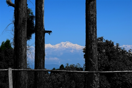 The Great Himalayas - Mountains, Snow, Black trees, Height