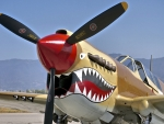 P40 Warhawk f