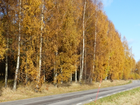 Autumn Color - Countryside, autumn, colors, birch, road, trees, sky