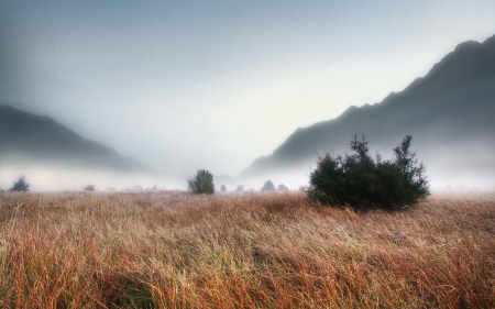 valley grass under autumn fog in new zealand hdr - fall, grass, mountains, hdr, fog, valley