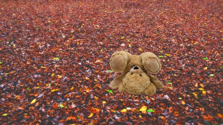 Autumn carpet - bear, leaves, nature, autumn
