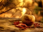 Autumn Leaves and Apple