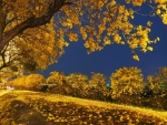 Yellow Falling on the Road