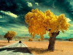 Yellow Trees on the Road