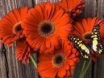 Gerbera with Butterfly