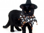 Witch Cat Costume