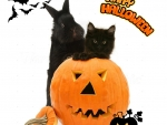 black bunny and kitty in a Halloween pumpkin