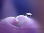 heart,purple,love,romance,