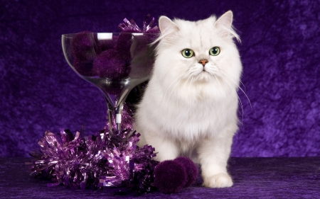 happy new year glass purple new year white cat