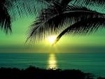 Green Sunset