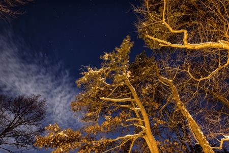 Winter Branches - Branches, Trees, Winter, Night, Nature, Night nature
