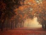 Park Fall Mist