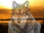 Sunset Wolves II