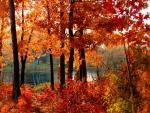 November beauty