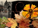 Fall Fantasies