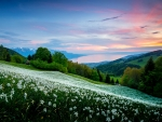 White Flowers On The Slope