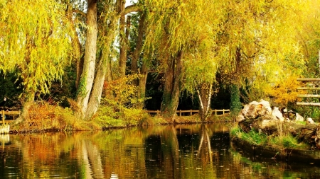 Autumn pond - Pond, Park, Trees, Autumn