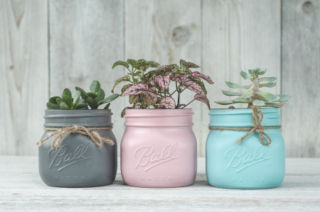*Painted Mason jars* - photography, plants, crafting, flowers, mason, painted, small, jars