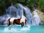 horse on a waterfall