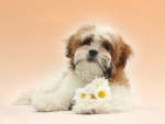 cute Shih tzu pup with flowers