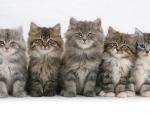 five cute kittens