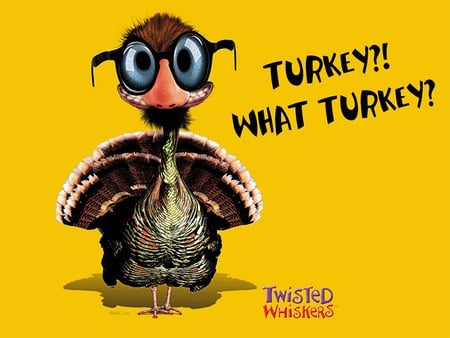 What Turkey - funny, thanksgiving, turkey, 3d