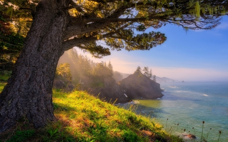 Oregon Coast - oregon, tree, nature, coast