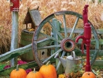 Country Backyard in a Fall Season