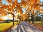 tree shadows on park path in autumn
