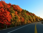 blacktop road forest toad in autumn