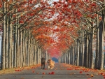 Autumn Road For Dogs