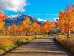 Fiery Fall Country Road