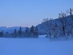 blue foggy winter morning scene
