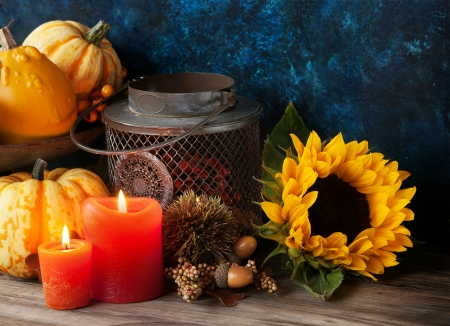 Autumn Still Life - Fall, lantern, acorns, sunflower, gourds, candles, still life, nuts, flame, berries, flower, Autumn, pumpkins