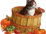 kitty in a wooden can