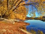 Shore of lake Hayes