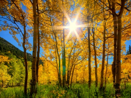 Autumn rays of light - forest, autumn, glow, golden, sunlight, beautiful, trees, sky, foliage, leaves, all, rays, sunshine, light
