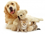 dog, kittens and teddy bear