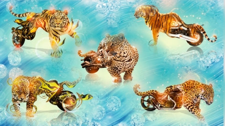 Turbo Cat - cheetahs, leopards, motorbikes, tigers, collage, cat, animals, wheels