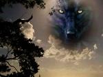 'Spirit wolf'.....
