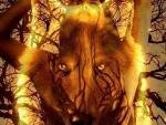 'Mystical spirit wolf'.....