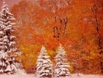 Autumn and Winter all in One